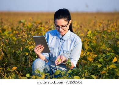 Pretty young agronomist holding tablet and soybean seeds in hand in field during harvest season