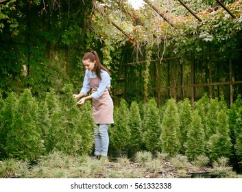 Pretty young gardener looking after young coniferous plants in greenhouse
