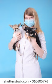 pretty young veterinarian with the little dogs