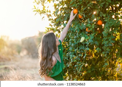 Pretty young woman, outdoors at sunset in a orange orchard, smiling and picking oranges. Happiness and healthy lifestyle concept, skin and hair care concept.