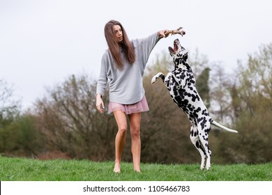 pretty young woman plays with a Dalmatian dog on the meadow