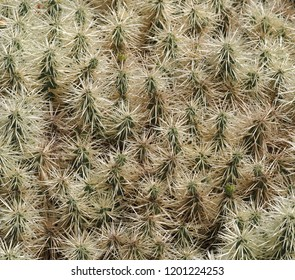 prickly cactus background
