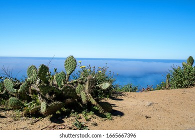 Prickly Cactus in the sand above the beautiful Pacific Ocean in California