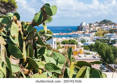 Prickly Pear cactus with fruits on Mediterranean Sea. At the background the view of the harbour and port at Ponza, Lazio, Italy. The largest island of the Italian Pontine Islands archipelago