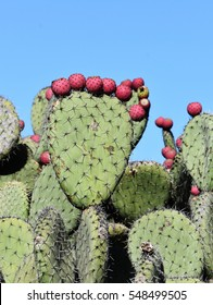 Prickly pear cactus silhouette against blue sky
