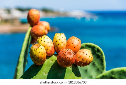 Prickly pear on the Italian coastline in Apulia. - Shutterstock ID 1818586703