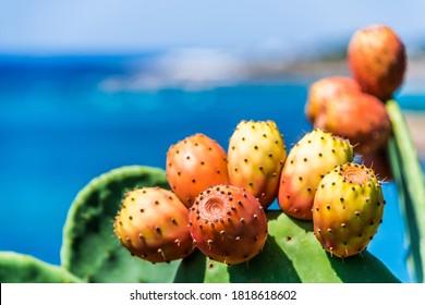 Prickly pear on the Italian coastline in Apulia. - Shutterstock ID 1818618602