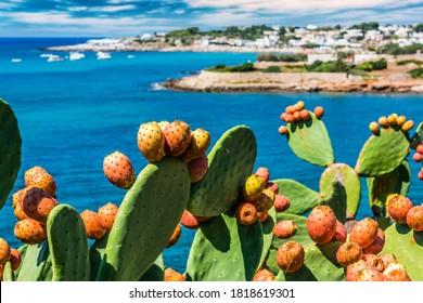 Prickly pear on the Italian coastline in Apulia.