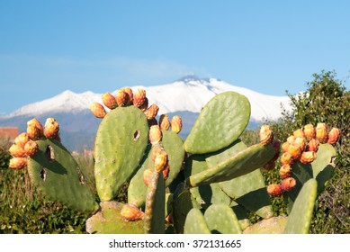 Prickly pear plant with fruits and volcano Etna covered with snow in background
