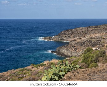 prickly pears enjoy the beautiful landscape of the coasts of the island of pantelleria