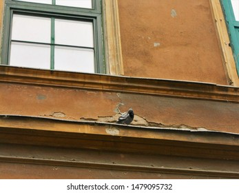 Prickly pigeon on the eaves of an old house in Budapest downtown in the morning