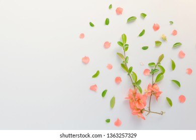 Prickly wild rose flower decoration flat lay top view on bright background