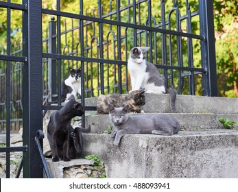 Pride street cats are sitting on the fence of the old park