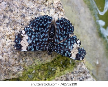 """primarily blue"""" is called a """"Red"""" Cracker is a great and butterfly black and blue"""