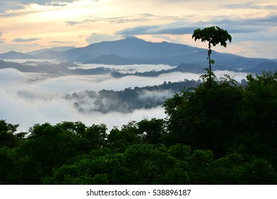 Primary Rainforest sunrise scenery in lowland Danum Valley, Sabah Borneo, Malaysia.  One of the few primary rainforest around the globe.
