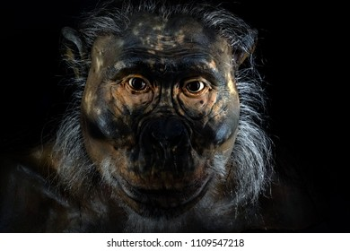 primitive man ape face isolated on black