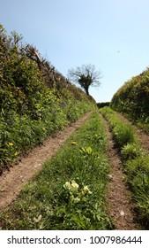 Primrose path 2
