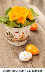 Primula flower and easter eggs decoration on wooden table