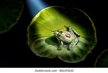 Prince frog in the spotlight, kissed by the princess