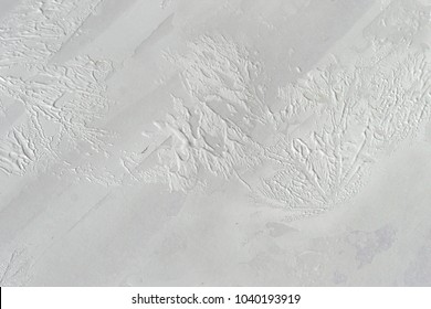 The print of leaves on a white primer