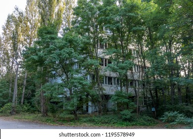 Pripyat abadoned house fully covered by nature now