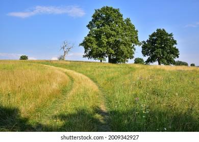 Prirodni rezervace Dolnonemcanske louky, Nature reserve Dolnonemcanske meadows - Shutterstock ID 2009342927