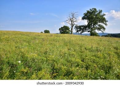 Prirodni rezervace Dolnonemcanske louky, Nature reserve Dolnonemcanske meadows - Shutterstock ID 2009342930