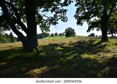 Prirodni rezervace Dolnonemcanske louky, Nature reserve Dolnonemcanske meadows - Shutterstock ID 2009342936