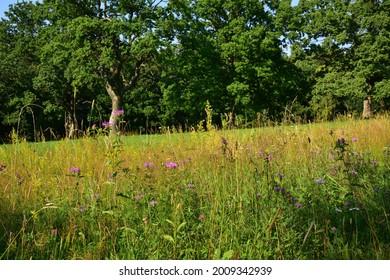 Prirodni rezervace Dolnonemcanske louky, Nature reserve Dolnonemcanske meadows - Shutterstock ID 2009342939