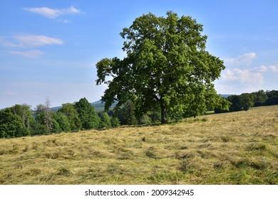 Prirodni rezervace Dolnonemcanske louky, Nature reserve Dolnonemcanske meadows - Shutterstock ID 2009342945