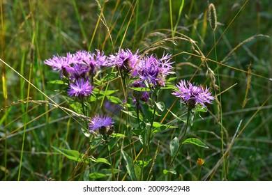 Prirodni rezervace Dolnonemcanske louky, Nature reserve Dolnonemcanske meadows - Shutterstock ID 2009342948