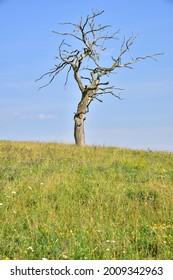 Prirodni rezervace Dolnonemcanske louky, Nature reserve Dolnonemcanske meadows - Shutterstock ID 2009342963