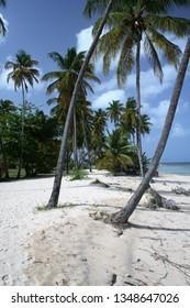 Pristine beach at Crown Point, Ward of Tobago, Trinidad and Tobago