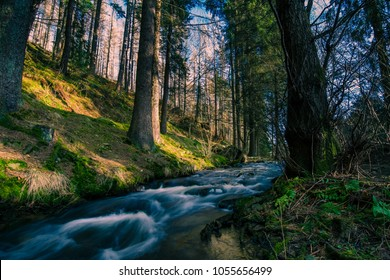 Pristine clean waters of fast river running through spring forest lit by golden sunset light