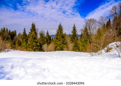 Pristine snowy mountain landscape with blue skies and puffy clouds with forest in background.
