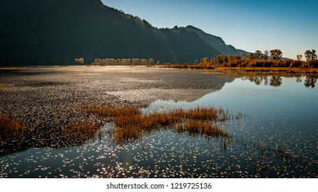 Probably my favourite place to go for a walk in Pitt Meadows, Pitt-Addington Marsh.