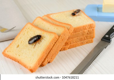 The problem in the house because of cockroaches living in the kitchen
