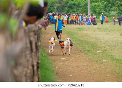 Probolinggo, Indonesia - 14 December 2016 : Karapan goat (Karapan Kambing) is very unique, a pair of goats are released simultaneously and is followed by a goat rider.
