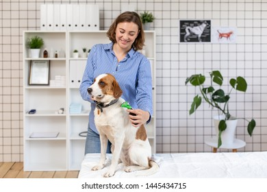 The procedure of grooming dogs in a veterinary clinic.