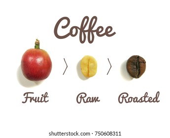 Process of coffee drinking production consist of coffee fruit, raw coffee bean and roasted coffee bean on white background.