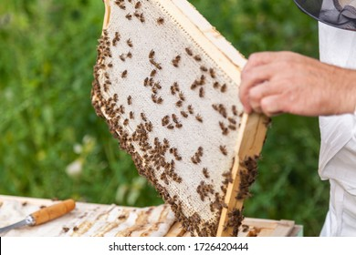 the process of extracting honey from the hive