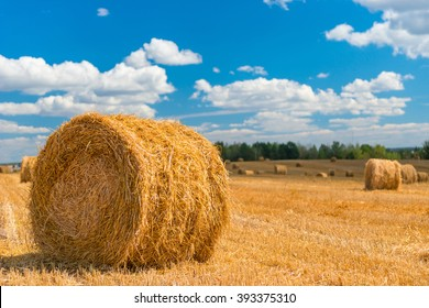 process of harvesting of agricultural fields in autumn