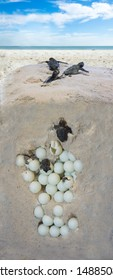 The process of hatching turtles. Installation