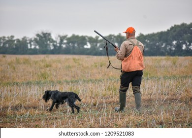 A process of hunting during hunting season, process of quail hunting, hunter and drathaar, german wirehaired pointer dog.