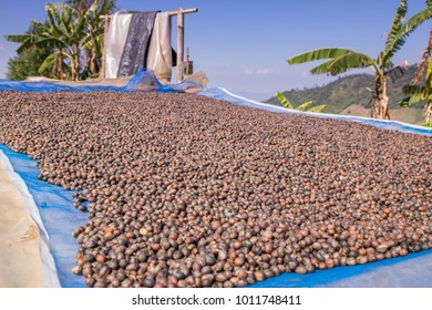 The process of making coffee beans dry by using sunlight.