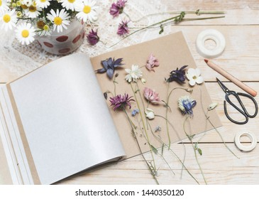 Process of making herbarium. Dried herbs and dried flowers for making herbarium