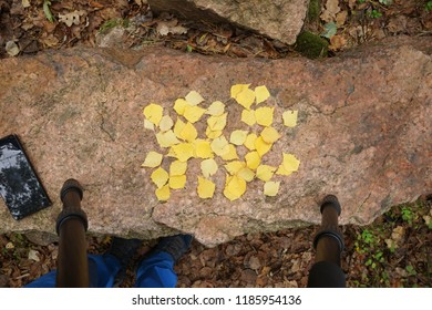 Process of making stock photografy. Photografer legs , tripod legs , phone and yellow birch leaves on granit stone.