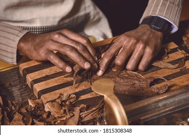 Process of making traditional cigars from tobacco leaves with hands using a mechanical device and press. Leaves of tobacco for making cigars. Close up of hands making cigars.