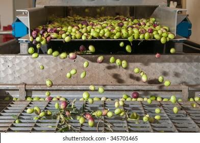 Der Prozess der Olivenreinigung und EntBlattbehandlung in einer modernen Ölmühle