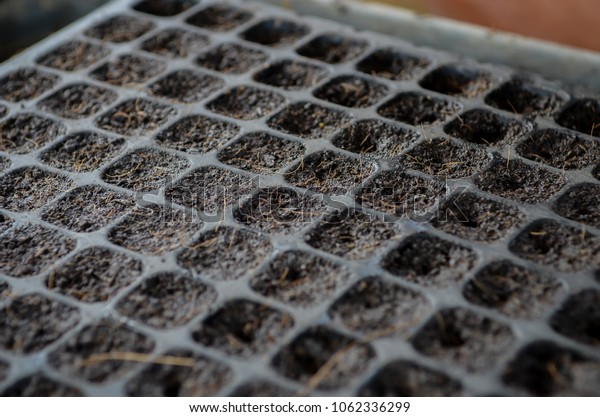 The process of planting organic vegetable garden organic. suphan buri